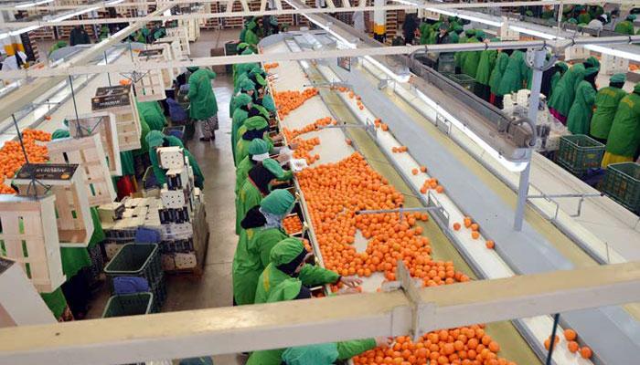 Les pistes de la Fenagri pour une relance de l'agro-industrie